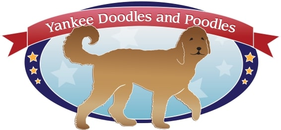 Yankee Doodles And Poodles logo