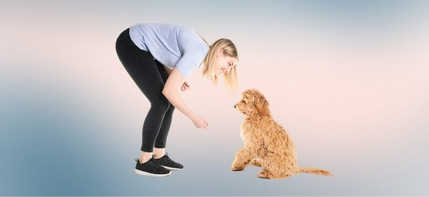 Trainer woman with his Golden Labradoodle dog