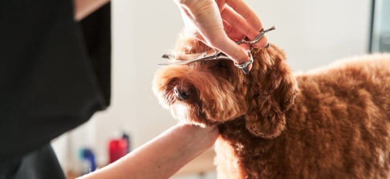 Professional groomer handle with pets