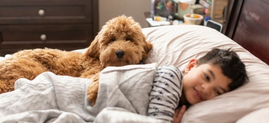 Child and Goldendoodle in Bed Playing