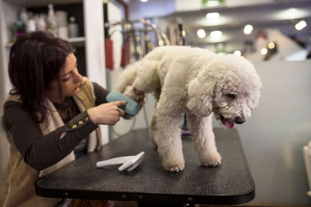 Combed dog in grooming salon
